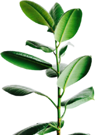 Personalized Art - art that plant