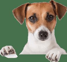 Personalized Art - dog